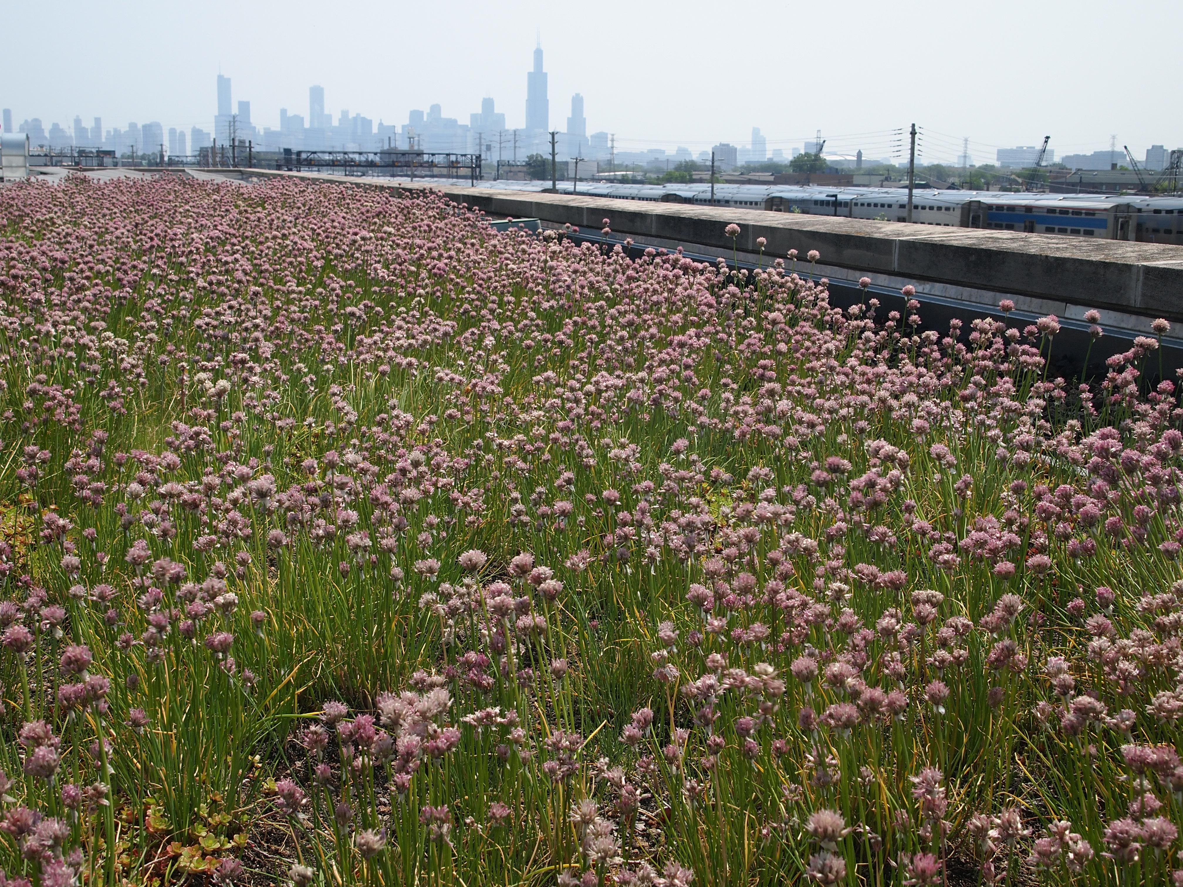 Chicago Center For Green Technology Chicago Il Roofmeadow