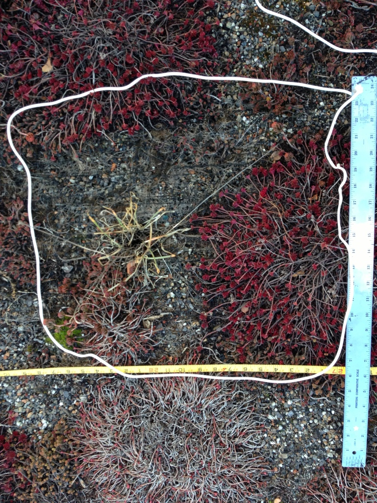 One of the transects on the GFS green roof: simple but effective