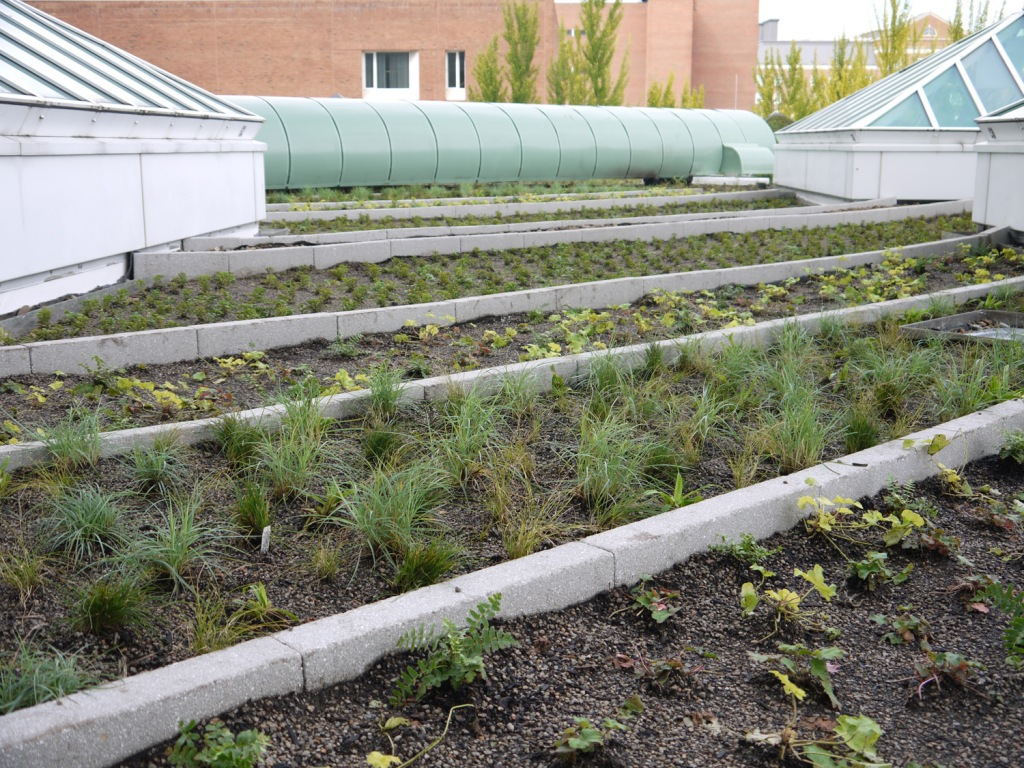 Ornamental grasses will mature and provide horticultural and visual interest.