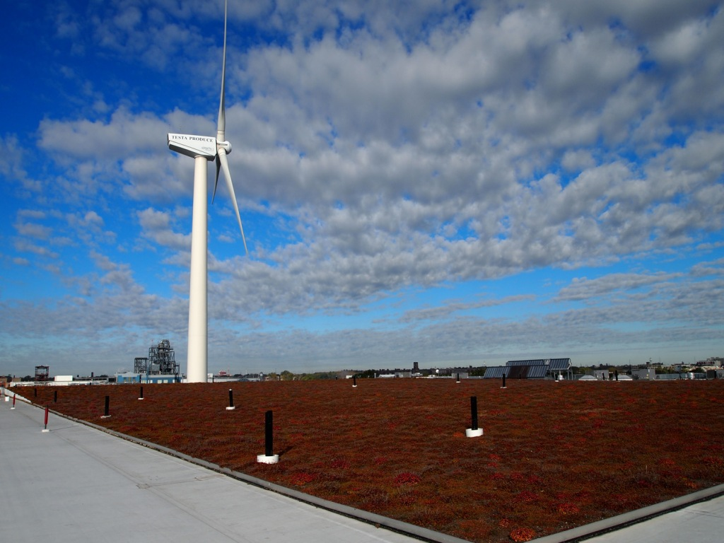 The flat portion of the green roof, which is responsible for supporting the weight of the media and plants of the barrel roof.